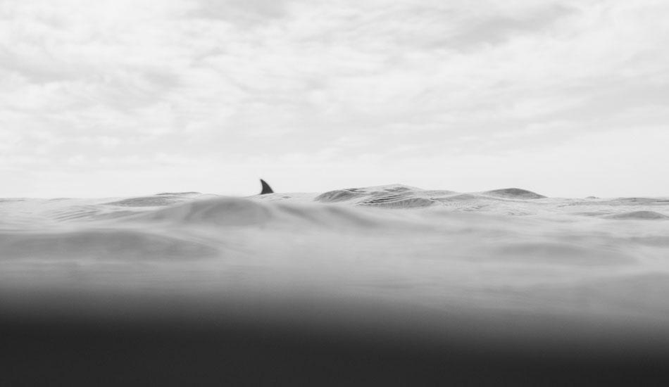 "Friendly swim. Photo: <a href= \""http://www.jasoncorrotophoto.com/\"">Jason Corroto</a>"