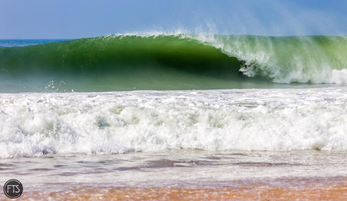 """Portuguese gem. Photo: <a href=\""""http://www.franciscotsantos.wix.com/portfolio\"""">Francisco Santos</a>"""