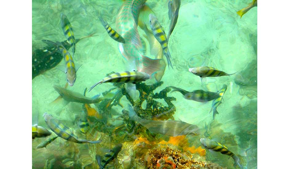 """Under the sea. Photo: <a href=\""""http://giveandsurf.org/\"""">Give and Surf</a>"""