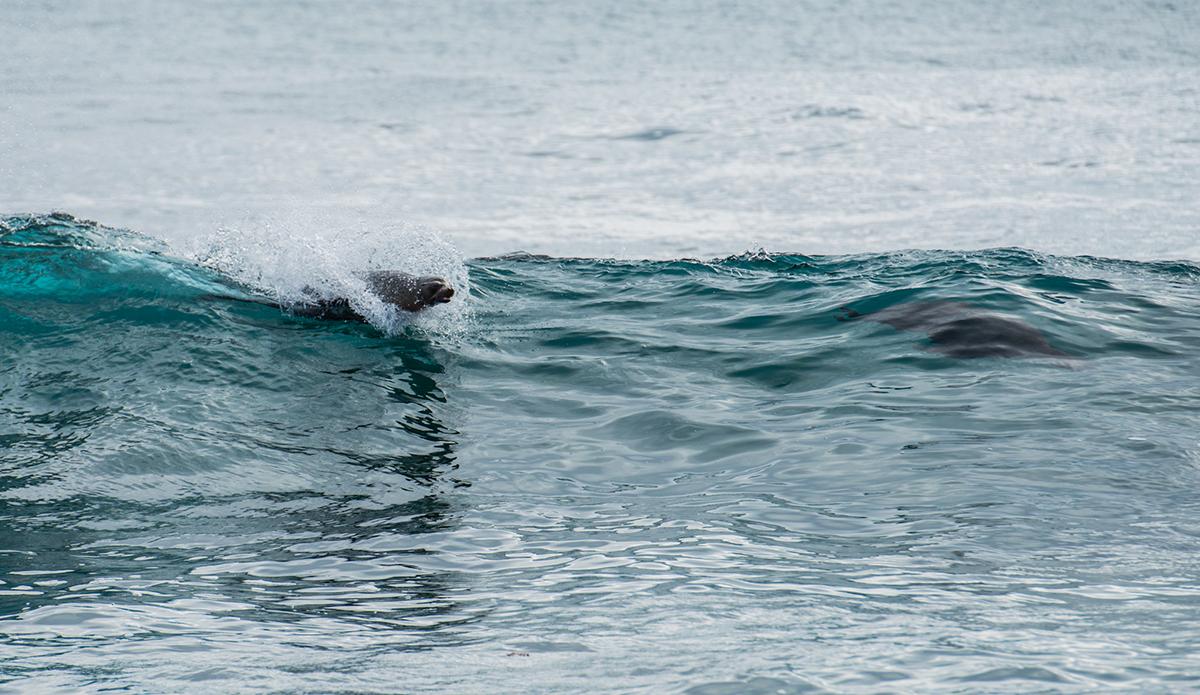 Sea lions enjoying the waves at San Cristobal. Photo: Maria Fernanda