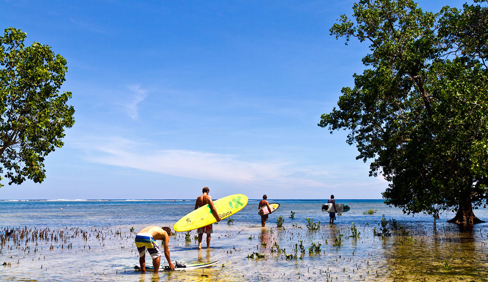 Team surfEXPLORE walking out at low tide to catch the incoming tide at an outer reef wave with massive ancient mangrove trees growing on the reef, something we had never seen before. Photo: Callahan/SurfExplore