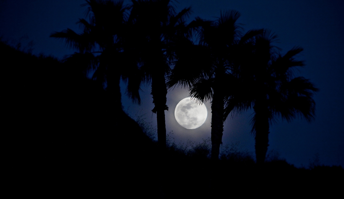 Full moon peaking out from behind palm trees. Southern California.  Photo: Sheldon Magner