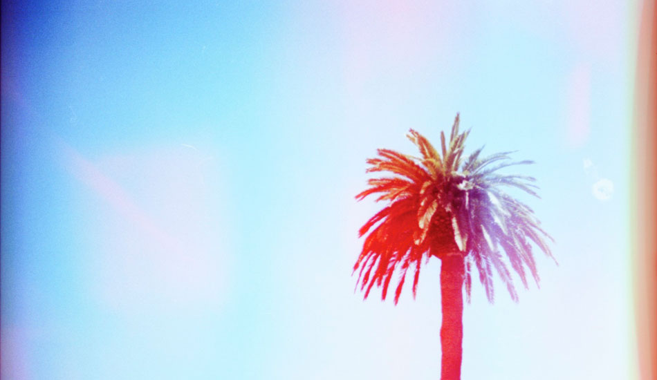 "Palm trees never get old. Photo: <a href=""http://www.ryantatar.com\"" target=\""_blank\"">Ryan Tatar.</a>"