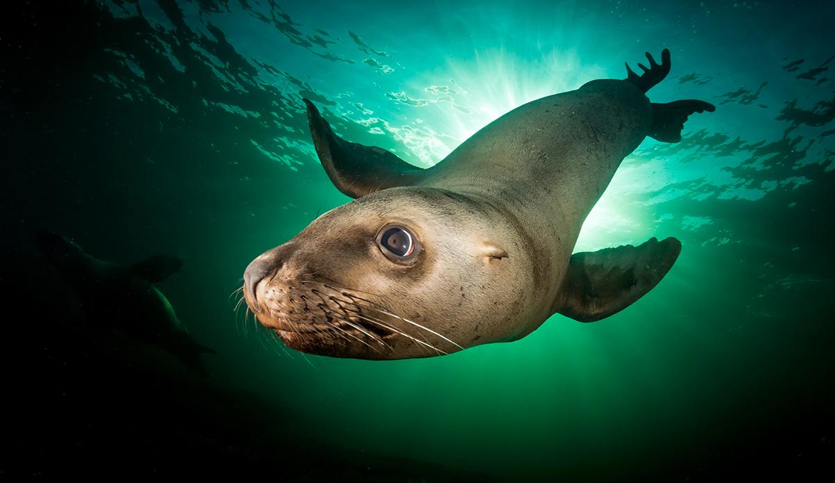 ocean phoque