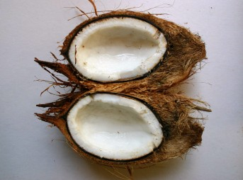 The magic of the coconut. Photo: Wikipedia