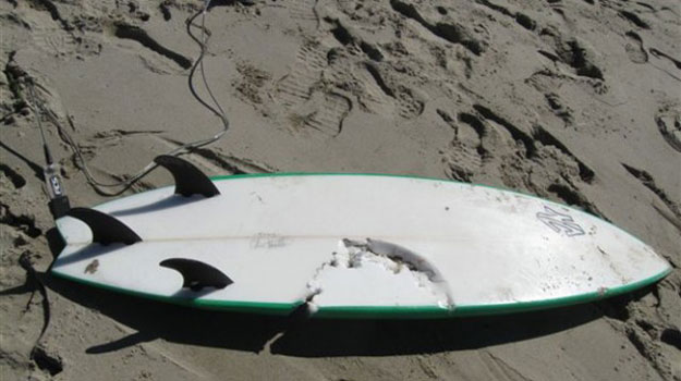 Franciso Solorio Jr.'s surfboard shows the bite of a shark looking for food.