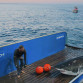 Mary Lee during her 2012 tagging off Cape Cod. Photo: Ocearch
