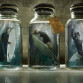 This is the final instalment of Protect Our Waves campaign images. It depicts surfers preserved in specimen jars and explores the theme of extinction, highlighting the environmental issues that currently threaten UK waves. Photo: Scott Rhea