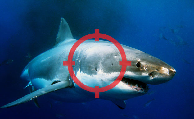 Should there be a target on sharks? Photo: Shutterstock
