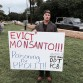 Mark Healey protests Monsanto and GMOs in Hawaii.
