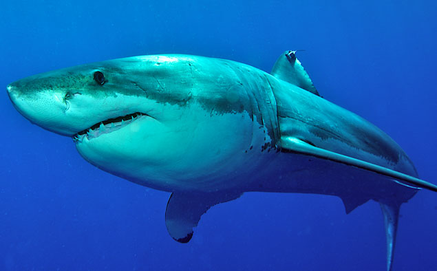 WA's government announced their new policy on shark control. Photo: Shutterstock