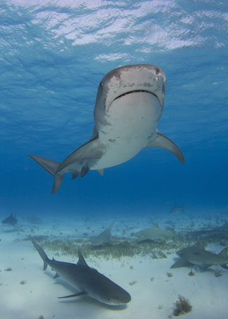 an analysis of the nature of sharks A 'quantum material' that mimics a shark's ability to detect the minute electric   material, meaning its performance taps into quantum mechanical interactions   or by contacting the nature press office at press@naturecom.