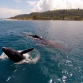 Eric Sterman Drone Whale Watching Screenshot