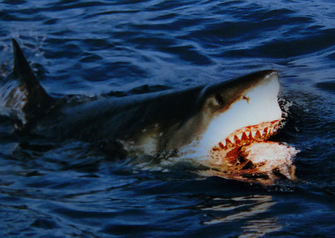 """""""It's coming right for us! Kill it! Kill all of them!"""" Photo: Wikimedia Commons"""