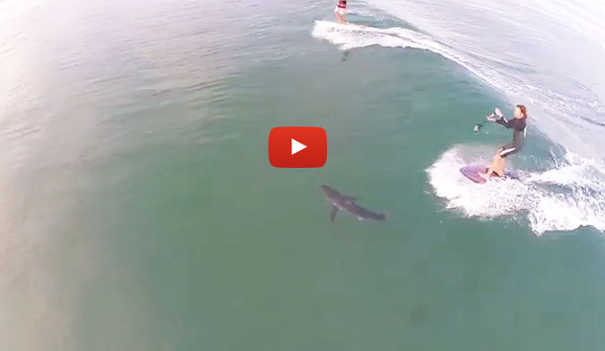 Stand Up Paddler Nearly Runs Over Shark On Wave The Inertia