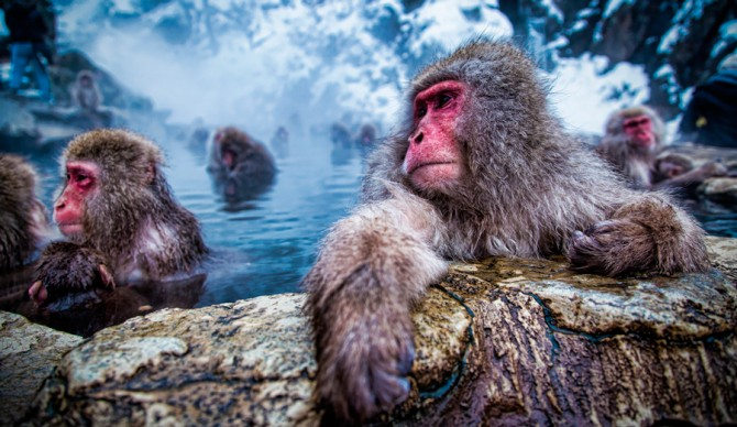 Make like a snow monkey and head to the hills.
