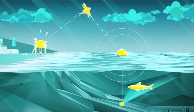 New Smart Buoys May Replace Shark Nets