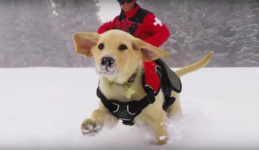 Avalanche Rescue Dogs Video