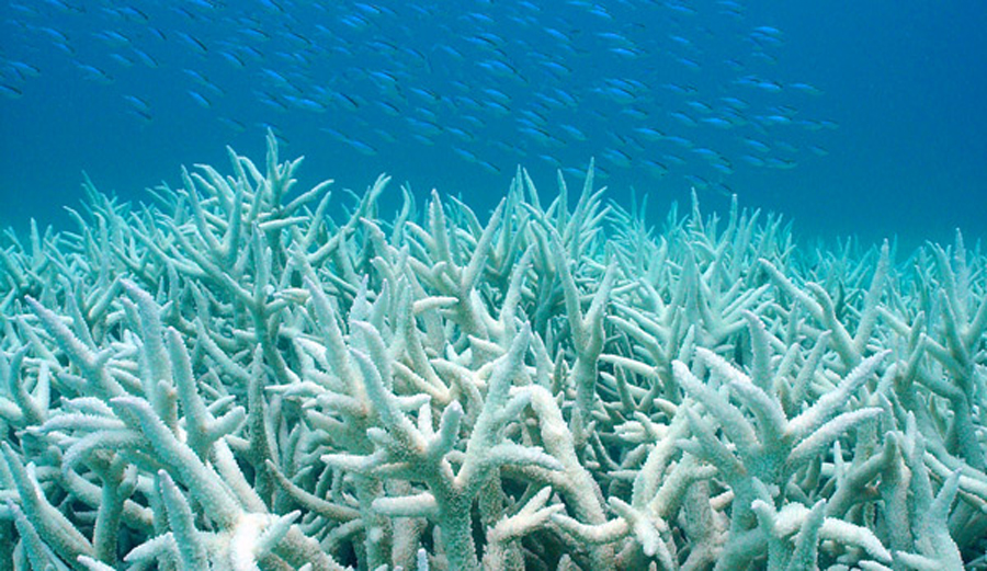 A Scuba Diver's Impact On A Coral Reef