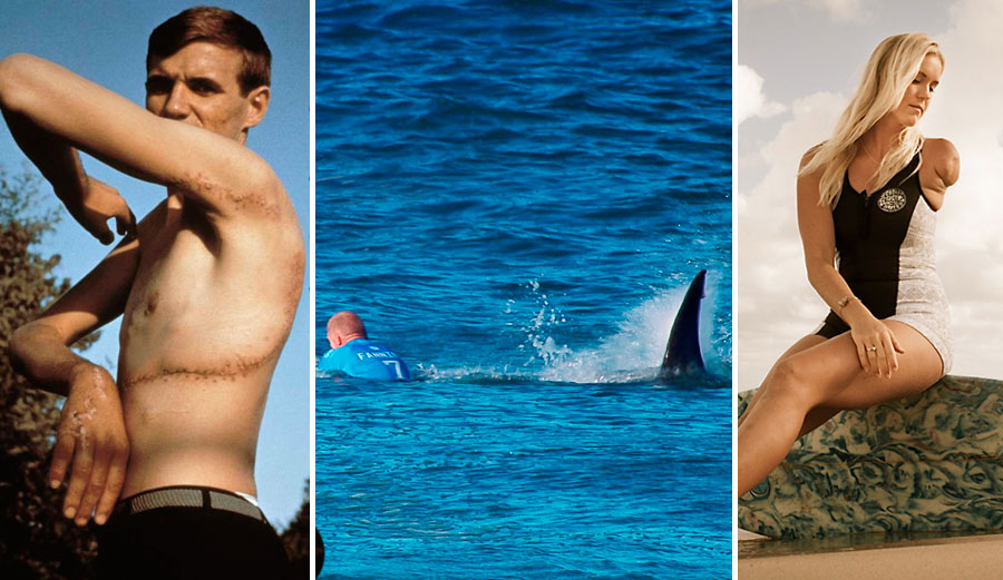 The 6 Most Infamous Shark Attacks In History The Inertia