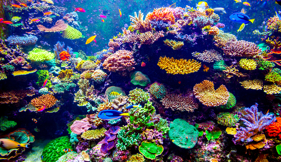 a look at coral reeds their habitats and the problems that they are facing Crisis overview : main sections of website outlines the problems facing america in regards to it's coastal waters  coral reefs, shellfish beds and.