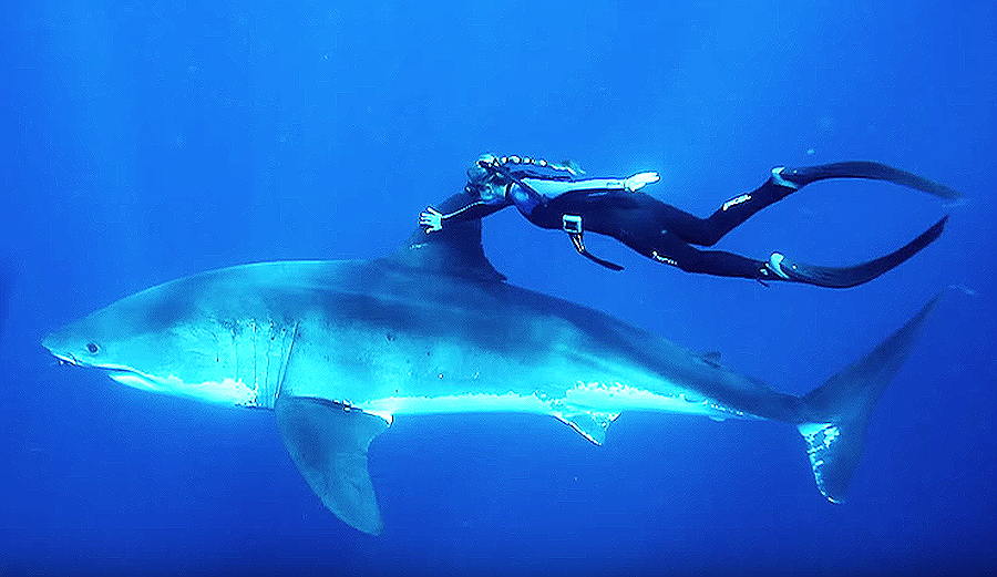 Ocean Ramsey At Ted Talks Will Change Your Perception Of