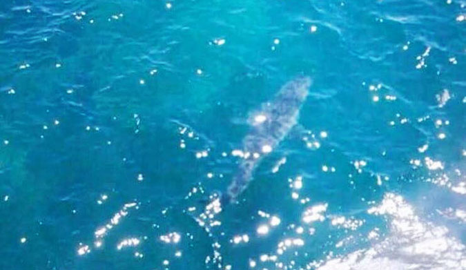A photo of the shark from a helicopter. It's estimated to be 23 feet long.