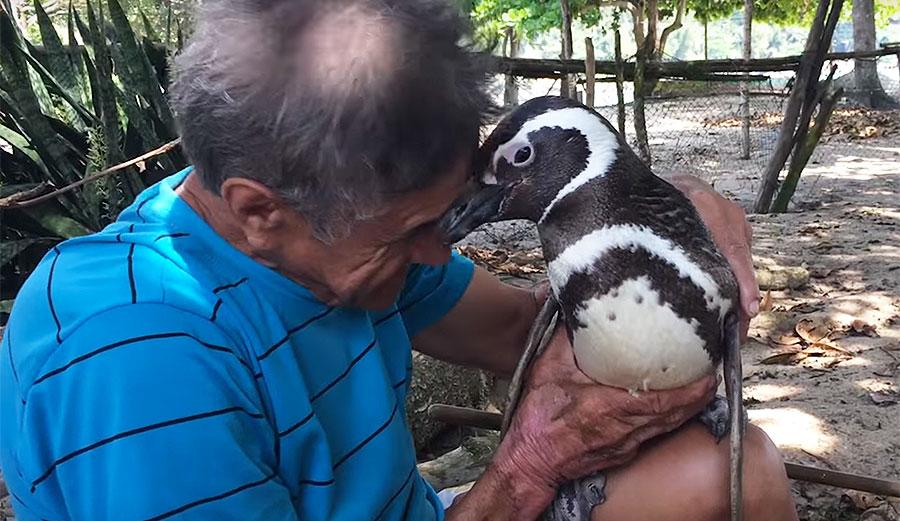penguin single men Discover the penguin little black classics - a series of 126 short books.