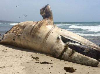 Dead whale Lowers
