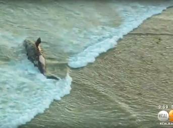 Dead Whale Lower Trestles