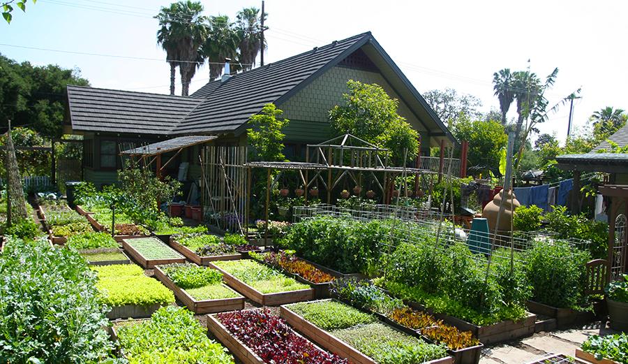 Good When Your Backyard Is Low Key The Garden Of Eden. Photo: Urban Homestead