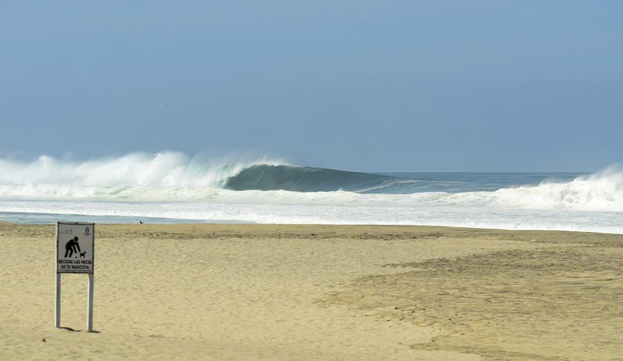 Puerto Escondido. One sneaks by unattended to. Photo: Ingrid Silva