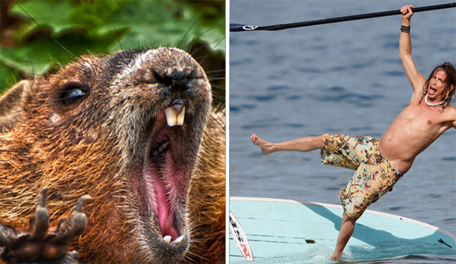 Sign of the Apocalypse? Beaver Attacks Stand-Up Paddler in North Carolina