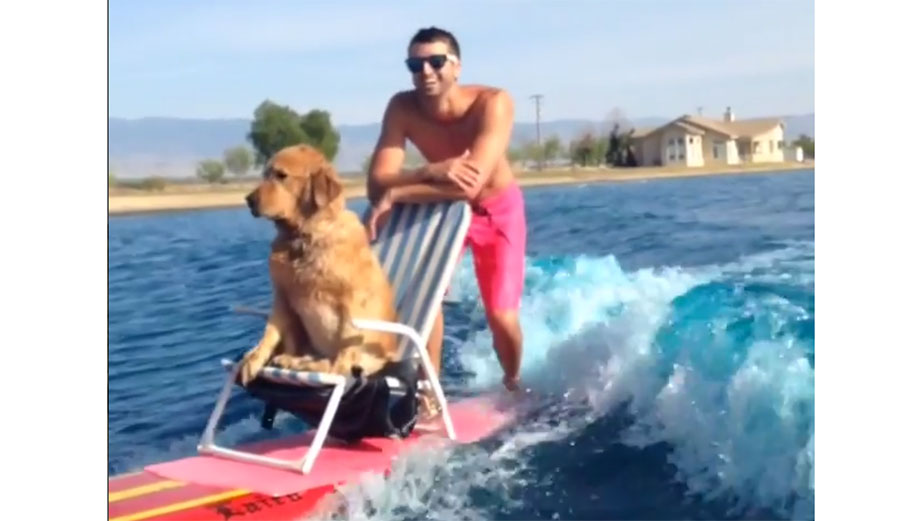 He has a tail that wags, something as simple as a stick or a tennis ball is a source of near-constant happiness, he actually enjoys things that smell bad, and he gets to chill on a lawn chair behind a boat.