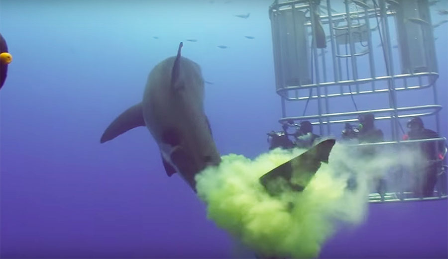 The footage of these people not only seeing one but getting enveloped in a huge cloud of shark shit makes me so, so jealous.