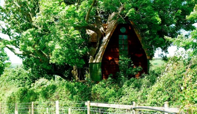 Look! Up in the trees! It's... your next vacation! Photo: Airbnb