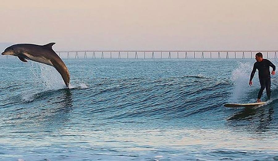 dolphinmain