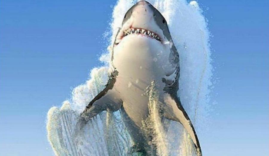 Incredible photo. More like incredible hoax. Photo: Shutterstock