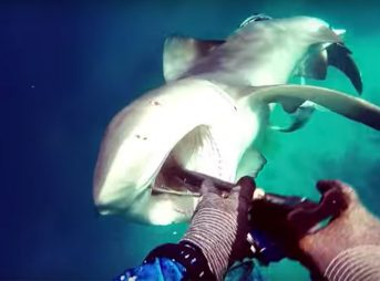 See the Moment a Bull Shark Attacks a Spearfisherman in Australia