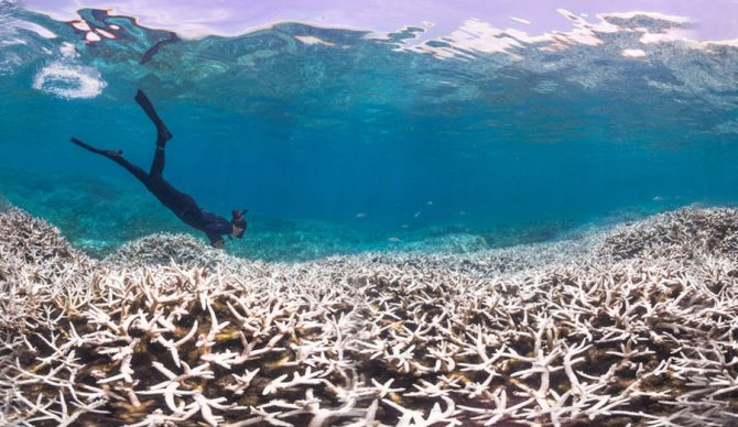 A coral reef after a bleaching event. Photo: PopSci
