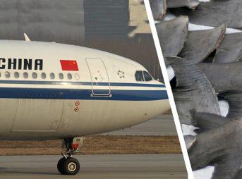 Shark fin ban air china