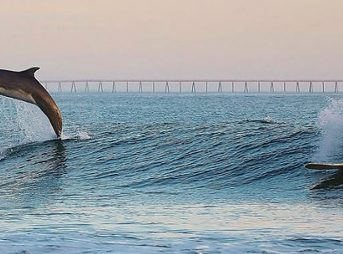"""""""Surfing could be part of defining social standing, play, reproductive activities and feeding,"""" according to Dr. Liz Hawkins."""