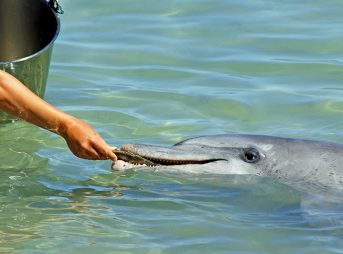 Gotta make sure we're treatin' these dolphins right. Dolphins are nice. Photo: Andy Tootell