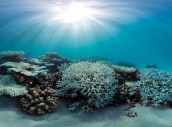A bleached coral reef in the Maldives. Photo: The Ocean Agency/XL Catlin Seaview Survey