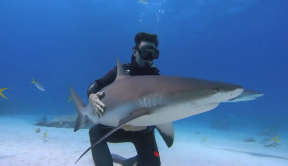 A Tribute To Rob Stewart His Legacy Endures With Sharkwater The Inertia