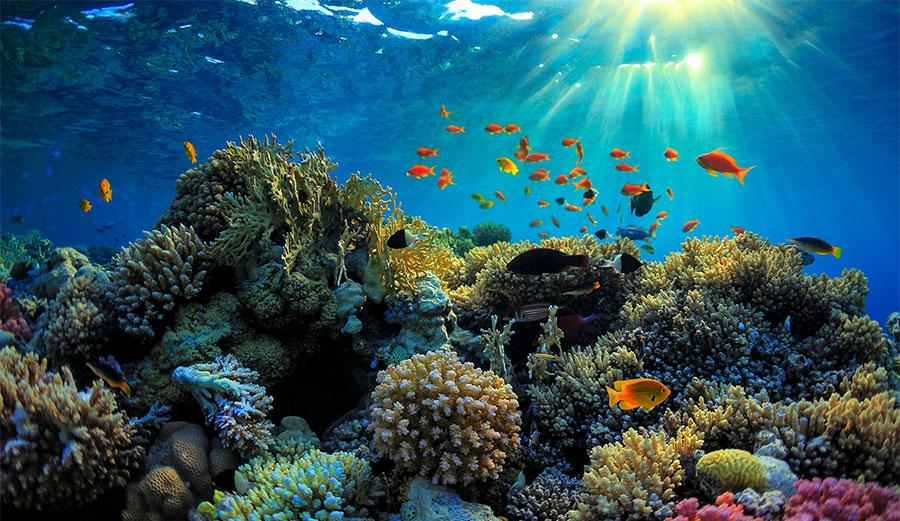 It's pretty, isn't it? Not for long. Photo: iStock