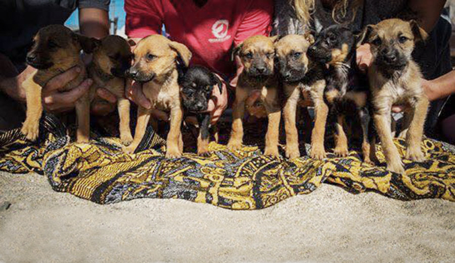 Box full of nearly-dead puppies is super sad... then AWESOME. Photo: Lester/Facebook