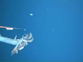 After dropping an instrument down to just shy of 500 feet, a curious squid decided to see just what was going on.