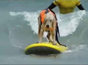 Dogs maybe aren't meant to surf. It's possible. Image: YouTube/JuiceWhale