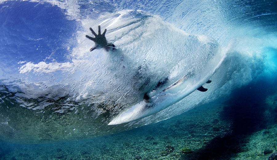 Culling Sharks Won T Protect Surfers The Inertia